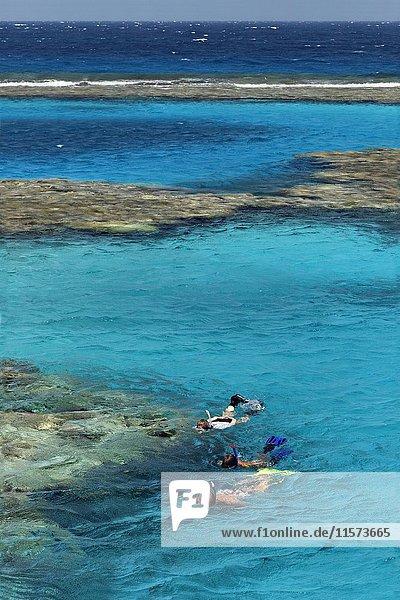 Familie  drei Schnorchler schnorcheln an Korallenriff  Rotes Meer  Ägypten  Afrika