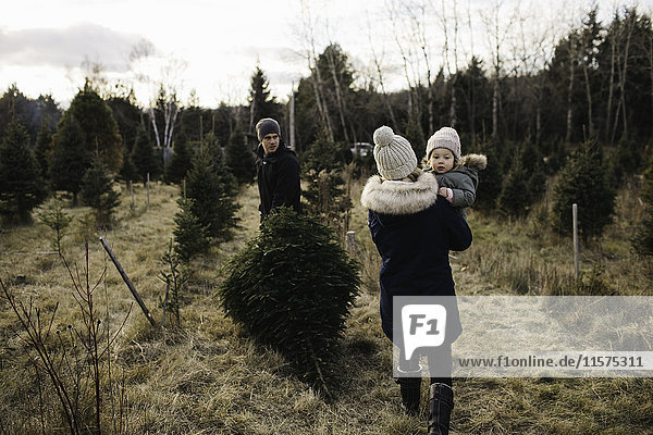 Parents and baby girl in Christmas tree farm  Cobourg  Ontario  Canada