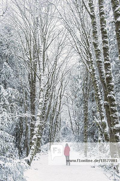 Frau im Fichtenwald  Bainbridge Island  Washington  USA
