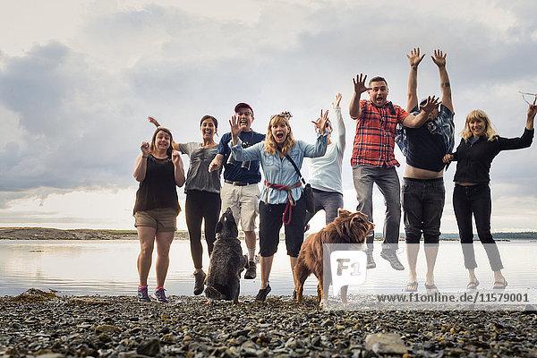 Porträt einer erwachsenen Familie mit springenden Hunden am Kiesstrand  Maine  USA