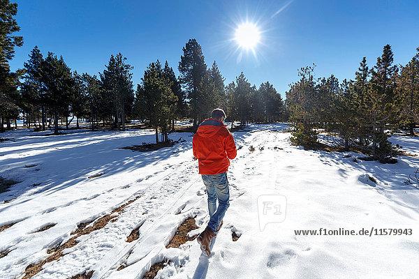 Rückansicht eines Mannes  der im schneebedeckten Wald spazieren geht