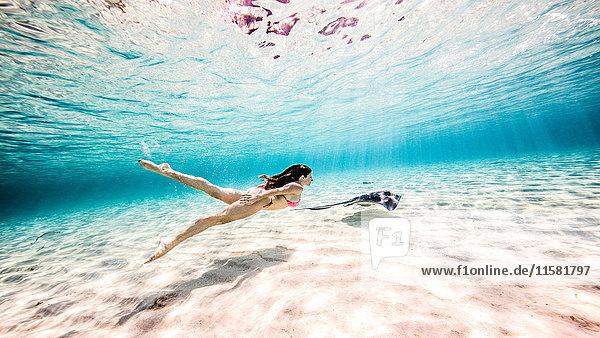 Weibliche Freitaucherin schwimmt mit Stachelrochen in der Nähe des Meeresbodens