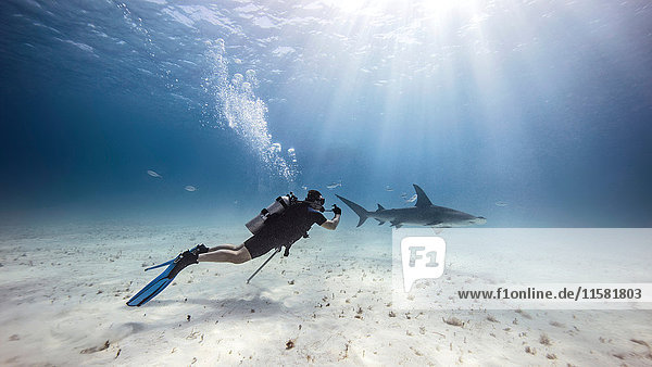 Underwater view of male diver watching shark near seabed