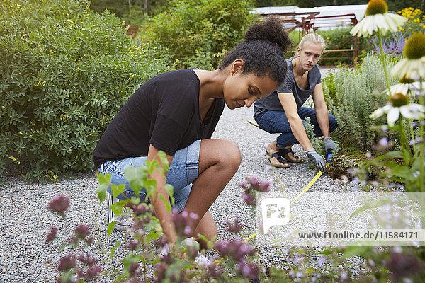 Gartenarchitekten messen Fußweg im Hof