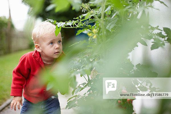 Kleinkind Junge untersucht Pflanzen