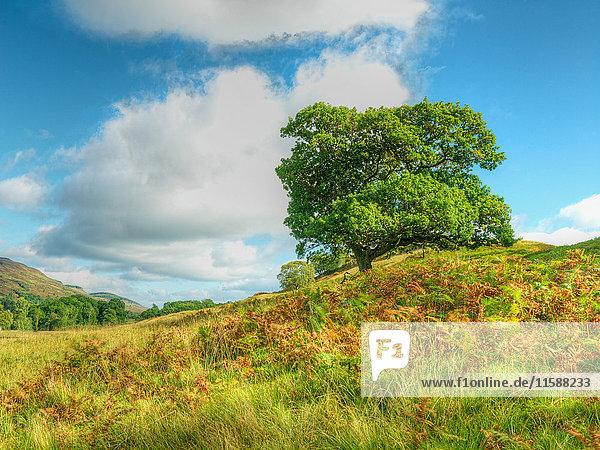 Im Feld stehender Baum unter blauem Himmel