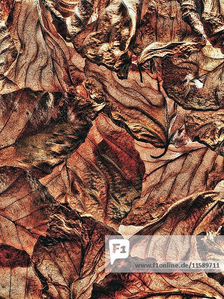 Haufen brauner Blätter