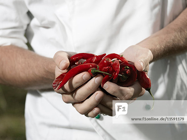 Chef holding chili peppers