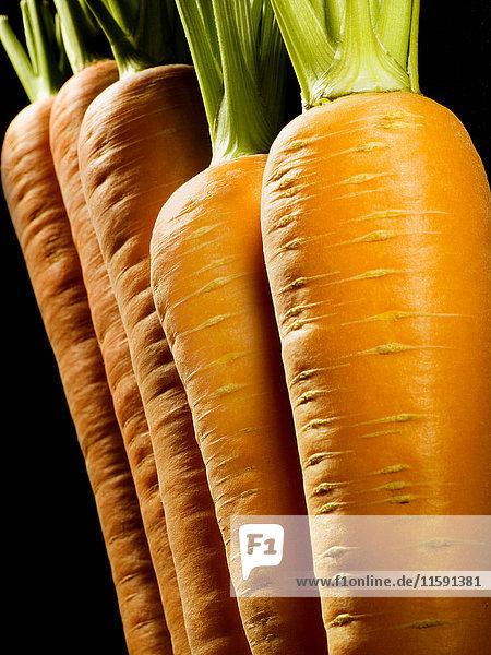 Ausschnitt einer Karottenreihe