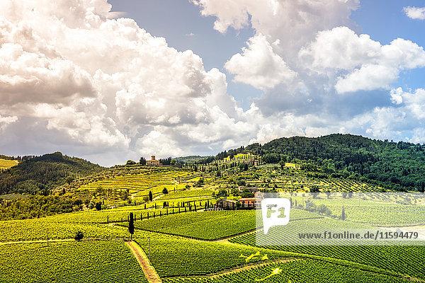 Italien  Toskana  Hügellandschaft mit Weinbergen