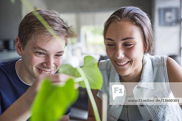 Junge und Mädchen untersuchende Pflanze Junge und Mädchen untersuchende Pflanze