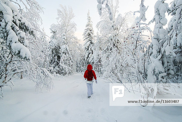 Caucasian woman hiking in snowy forest