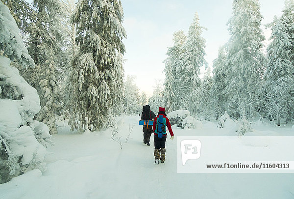 Caucasian couple hiking in snowy forest