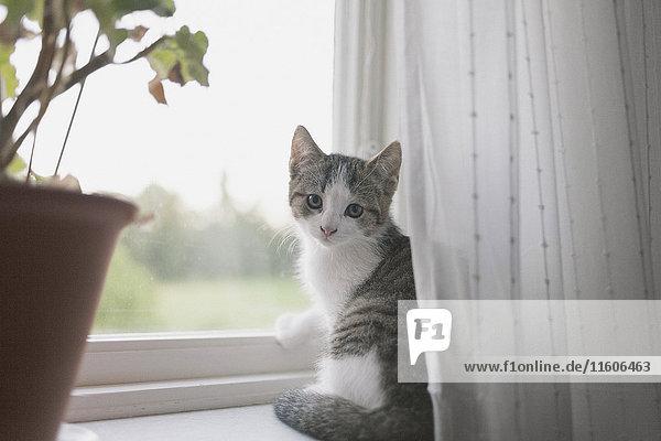 Porträt einer Katze auf der Fensterbank sitzend Porträt einer Katze auf der Fensterbank sitzend