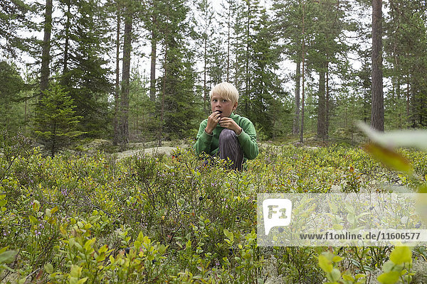 Boy picking bilberries in forest