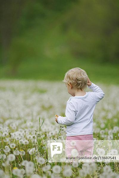 Rückansicht des Kleinkindes inmitten von Löwenzähnen auf dem Feld