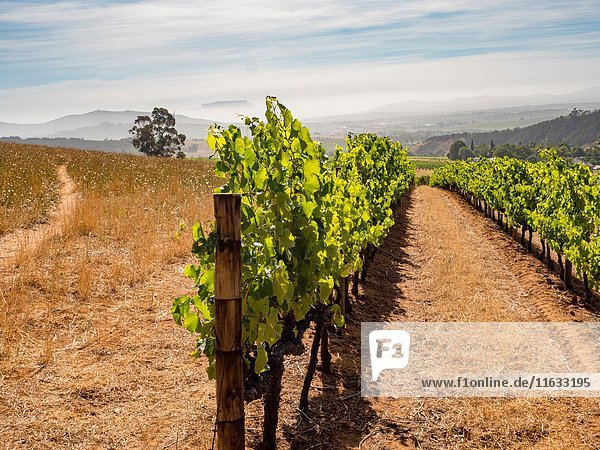 South Africa Wine Country Scenic.