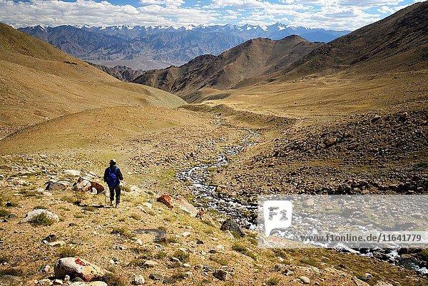 India  Jammu and Kashmir State  Himalaya  Ladakh  trek from Saboo to Khalsar in the Nubra valley  trekker going down from Digar La towards Saboo