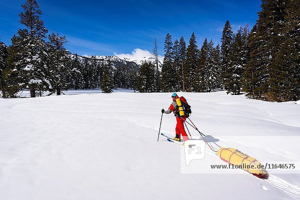 Backcountry skier towing a sled  Ansel Adams Wilderness  Sierra Nevada Mountains  California USA.