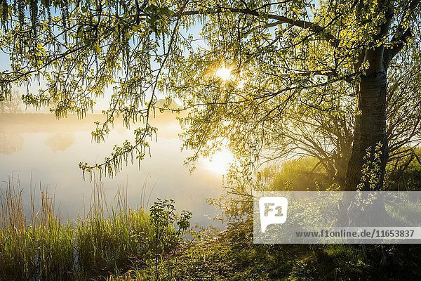 Lakeside with sun and morning mist  Streudorf  Lake Altmuhlsee  Weissenburg-Gunzenhausen  Bavaria  Germany.