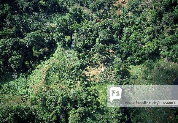 Deforestation. Cathedral Rainforest Scientific Preserve. Osa Peninsula