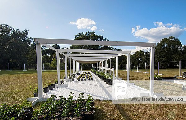 Central Florida Home Organic Garden greenhouse being constructed with beams and plants for healthy eating and diet.