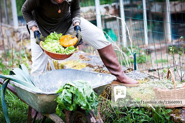 Halsdraufsicht einer Gärtnerin beim Pflücken von Gemüseschalen im Garten