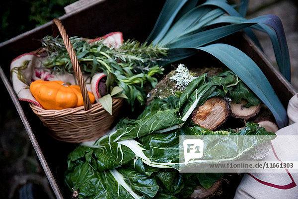 Kiste mit frisch gepflücktem Frühlingsgrün und Kürbisgemüse im Garten