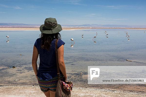 Frau schaut Flamingos auf dem See an  San Pedro de Atacama  Chile