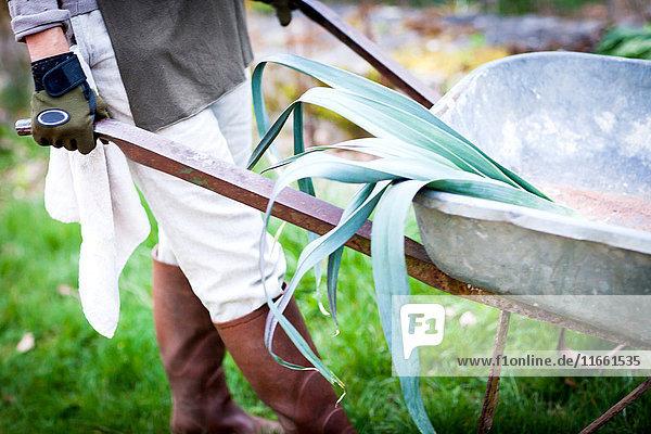 Hüftunteransicht einer Gärtnerin  die eine Schubkarre im Garten schiebt