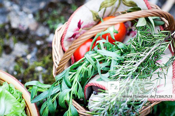 Korb mit frisch gepflückten Tomaten und Kräutern im Garten