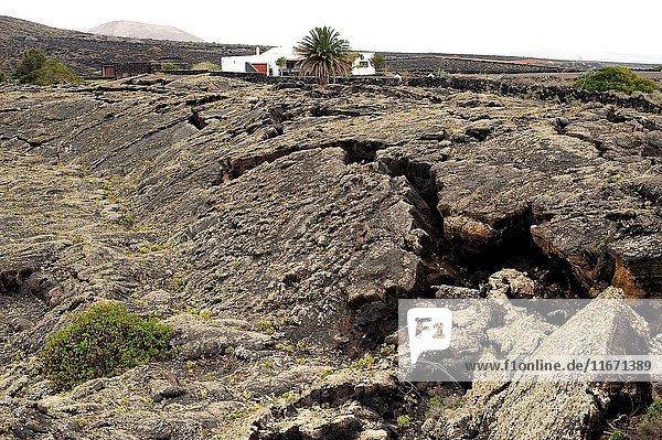 Solidified basaltic flow in Masdache  Lanzarote Island  Las Palmas  Canary Islands  Spain.