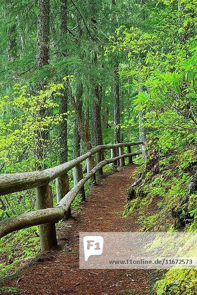 Salt Creek Falls Trail  Willamette National Forest  Oregon.