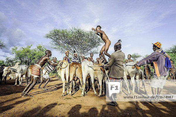 Young man jumping the bulls. This is the rite of passage for boys coming to an age of becoming men. Hamer tribe.