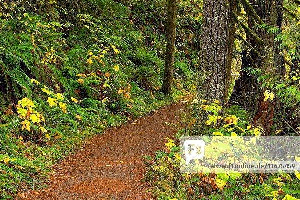 Trail of Ten Falls  Silver Falls State Park  Oregon.