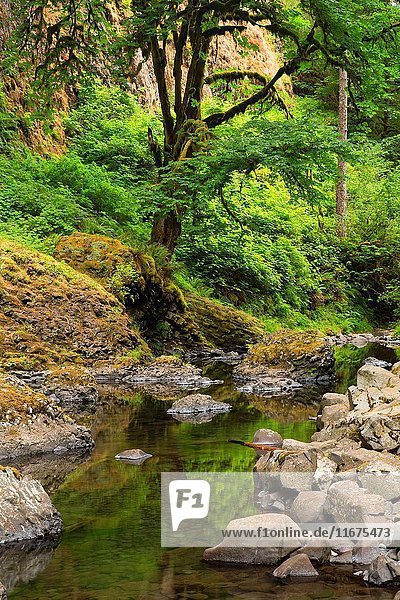 Abiqua Creek from Abiqua Falls Trail  Marion County  Oregon.