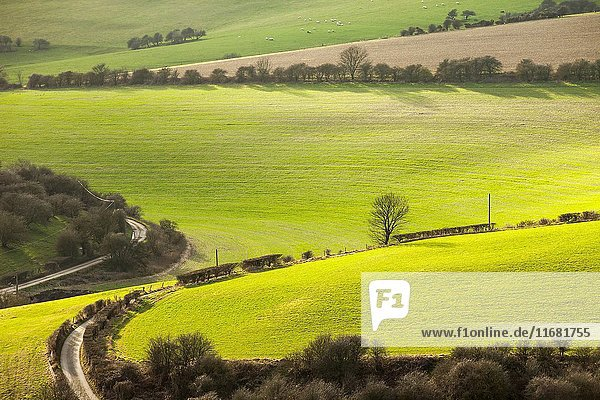 Early spring in South Downs National Park near Brighton  East Sussex  England.