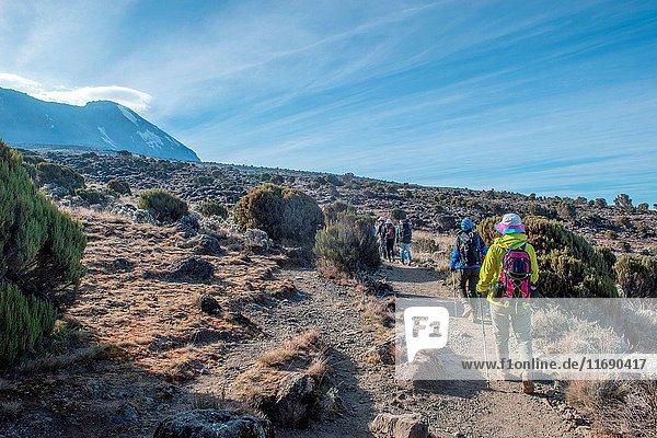 Kilimanjaro scenery