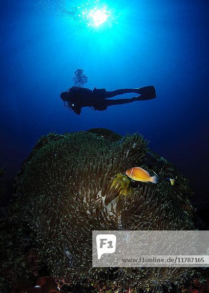 Philippinen  Dumaguete  Taucher im Meer