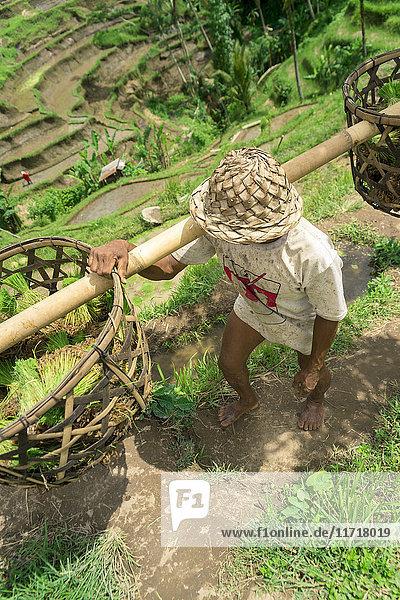 'A farmer working on rice terraces  near Ubud; Tegallalang  Bali Island  Indonesia'