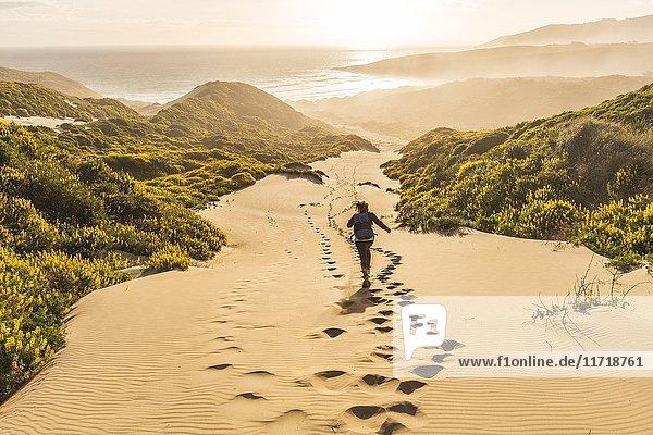 Frau rennt Düne hinunter  Sanddünen mit gelben Lupinen (Lupinus luteus)  Sandfly Bay  Dunedin  Otago  Otago Peninsula  Südinsel  Neuseeland  Ozeanien