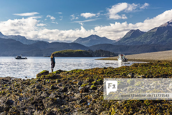 Woman standing on a rocky and kelp covered beach enjoying the view of the Kenai Mountains  Hesketh Island  Southcentral Alaska  USA