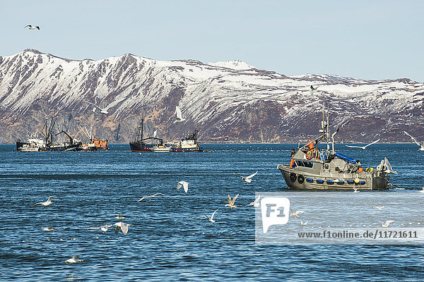 Commercial fishing boats and tenders in Bristol Bay  Southwest Alaska  USA