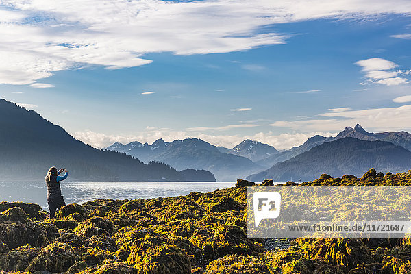 Woman standing on a rocky and kelp covered beach photographing the Kenai Mountains with her smart phone  Hesketh Island  Southcentral Alaska  USA