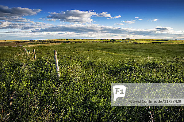 'Green fields on prairie farmland; Herschel  Saskatchewan  Canada'