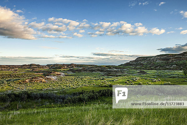 'Landscape of green foliage and brown hills under a blue sky with cloud; Herschel  Saskatchewan  Canada'