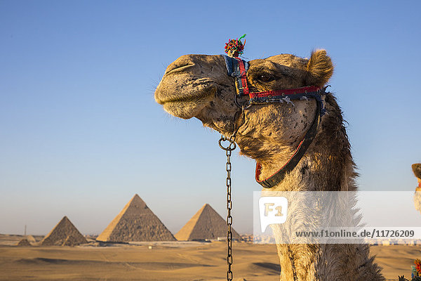 Pyramids of Giza  Giza  Cairo  Egypt