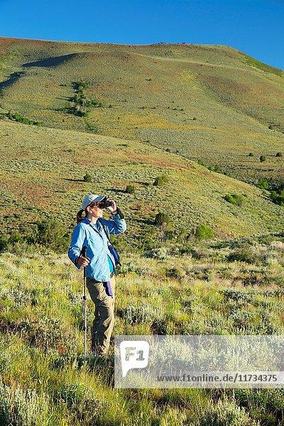 Birding in sage grassland along Barnhardy Road  Hart Mountain National Antelope Refuge  Oregon.
