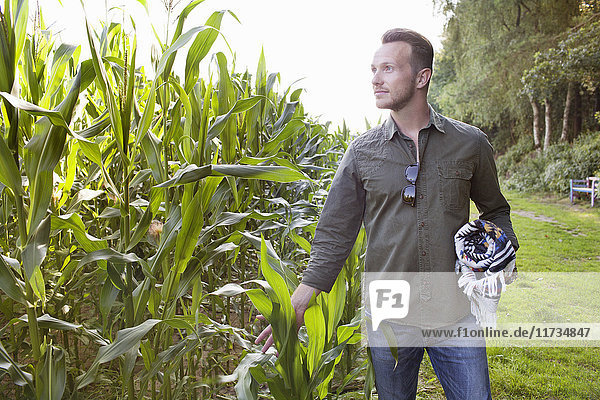 Mid adult man looking at field touching corn plants