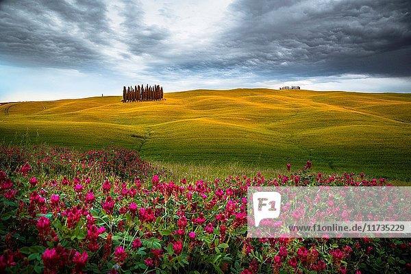 San Quirico d'Orcia  Tuscany  Italy.